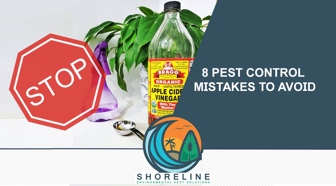 8 Pest Control Mistakes to Avoid