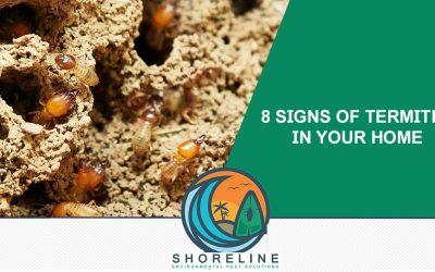 8 Signs of Termites in Your Home (White Ants)