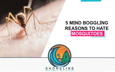 5 Mind Boggling Reasons to Hate Mosquitoes