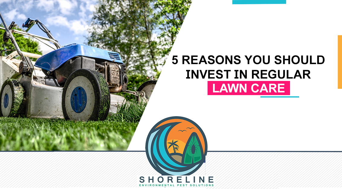 5 Reasons You Should Invest In Regular Lawn Care