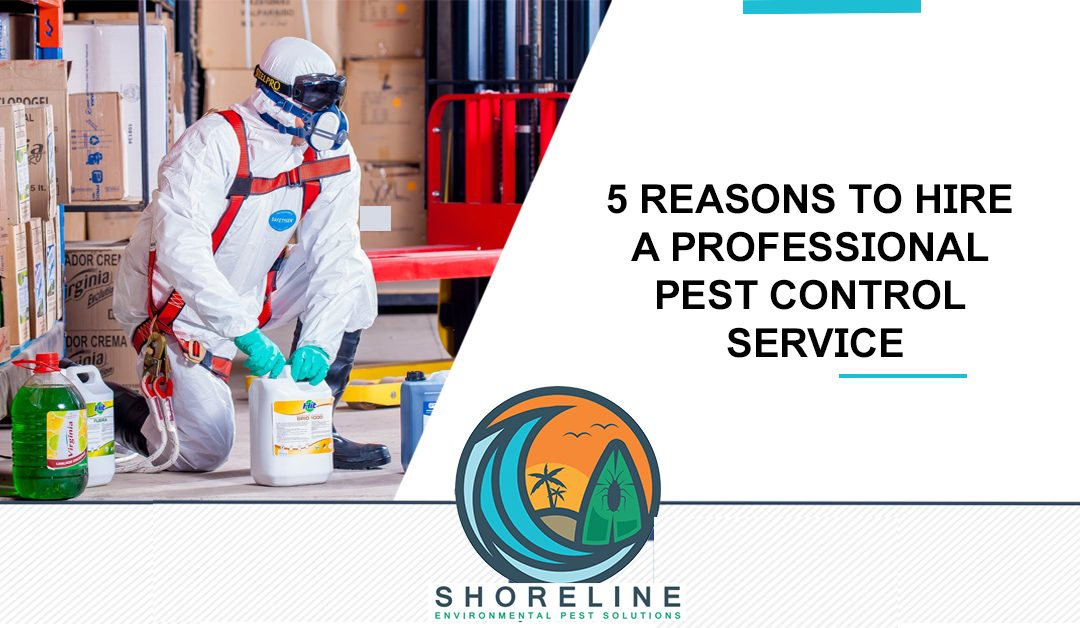 5 Reasons to Hire a Professional Pest Control Service