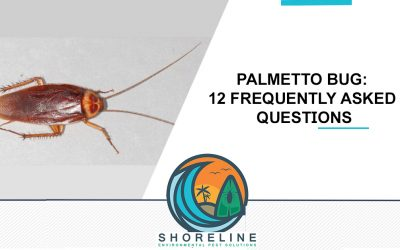 Palmetto Bug: 12 Frequently Asked Questions