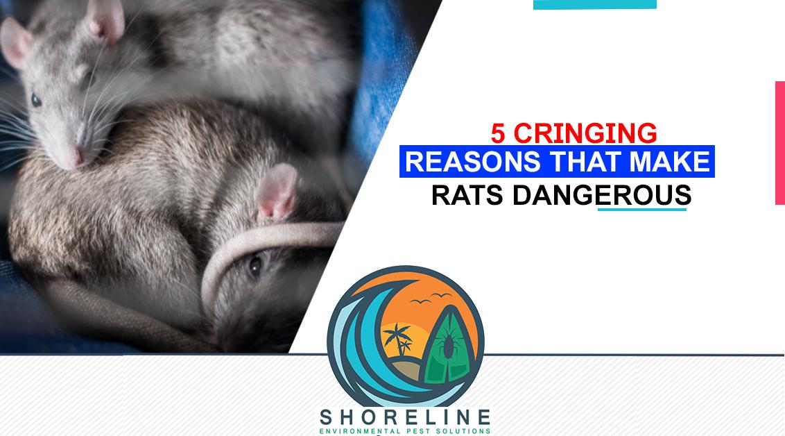 5 Cringing Reasons That Make Rats Dangerous