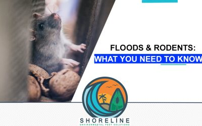 Floods & Rodents: What You Need To Know