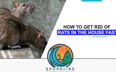 How to Get Rid Of Rats in the House Fast