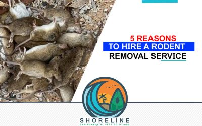 5 Reasons to Hire a Rodent Removal Service